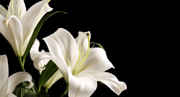The Most Popular Easter Flowers And Their Common Meanings
