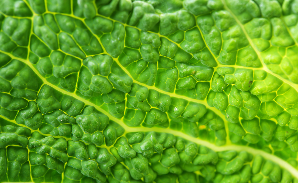 Leafy Green Vegetables are an example of Low Carb Superfoods