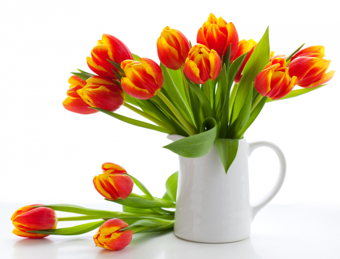 orange tulips white vase