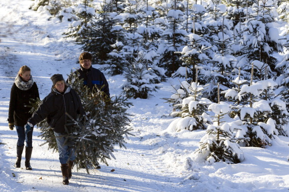 Forestries Open Christmas Tree Season