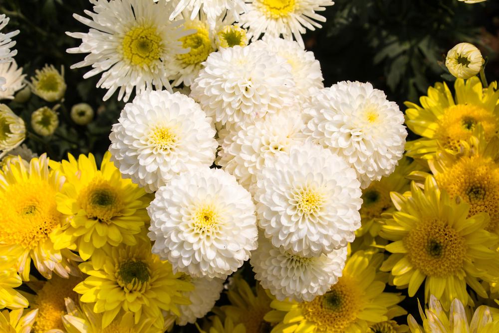 plant blooms