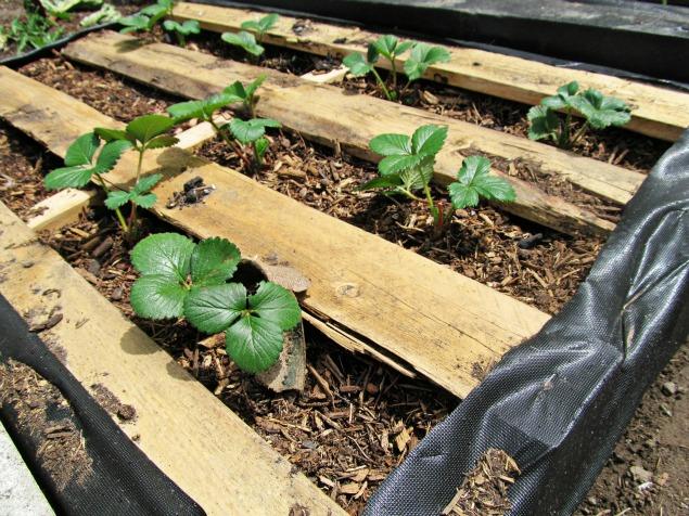 Raised Pallet Garden Bed