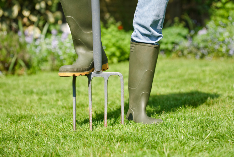 Aerate the Lawn