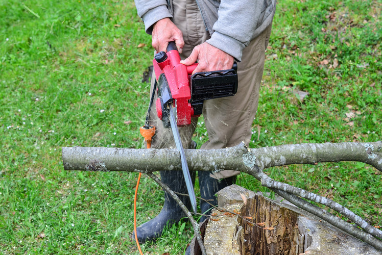 Cut back any branches or prune shrubs