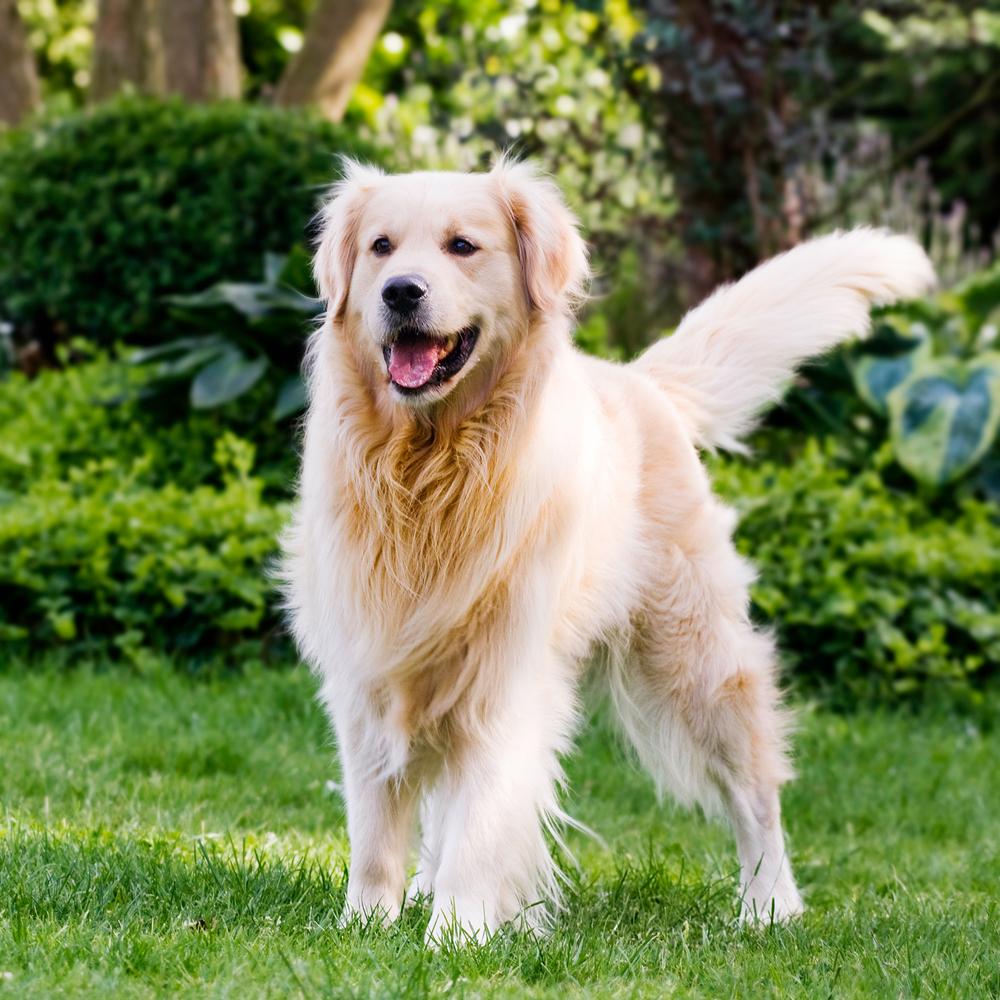dog proof your garden