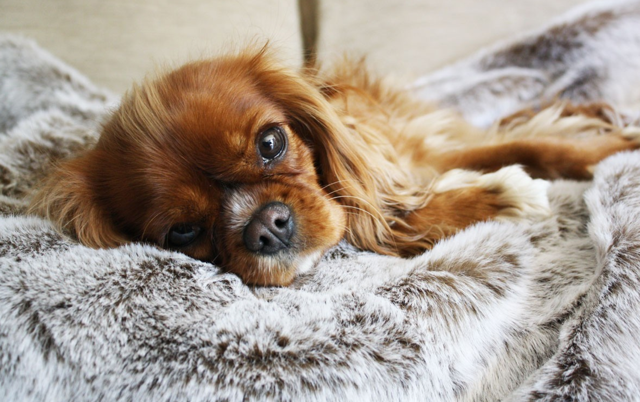 using washable fabrics is one of the best tips for a dog proof house