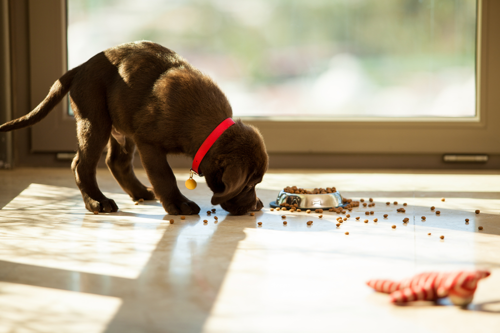 don't leave dog or cat food lying around as your baby could  eat this accidentally