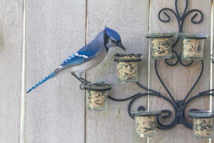 Tea light Birdfeeder