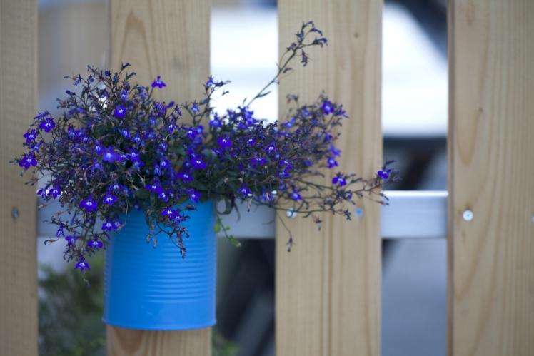 Tin Can Flowerpots