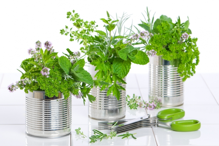 Try These Brilliant DIY Projects Using Tin Cans - Herb Garden