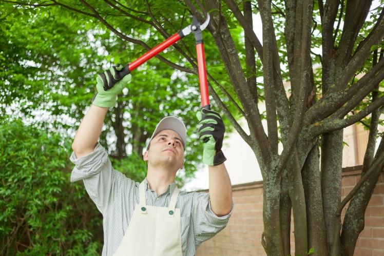 trim trees