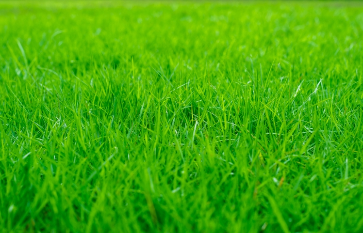 Discover Lawn Care Service
