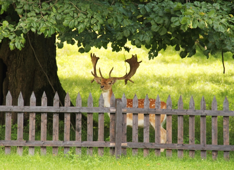 Fences to Keep Deer Out