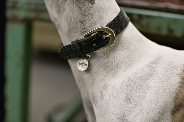 Vintage Belt to Luxury Dog Collar