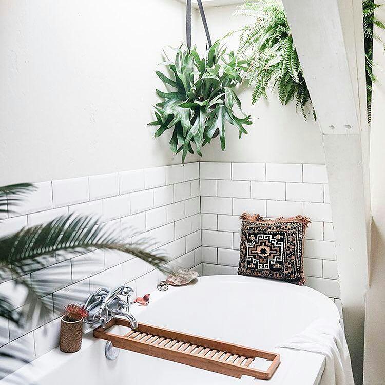 Shower Plants