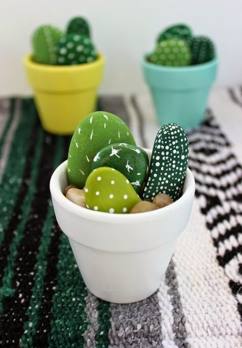 Rock Cactus Plants