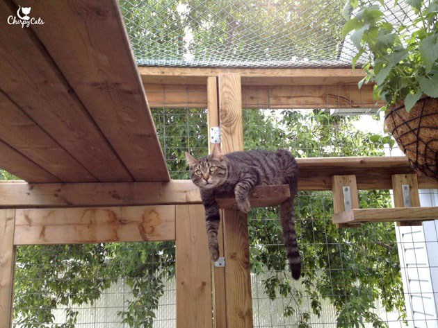 how-to-build-a-catio-1