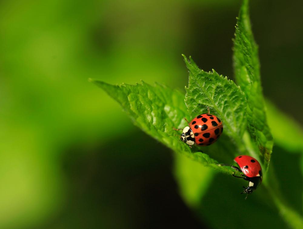 #11 Ladybug Feeder