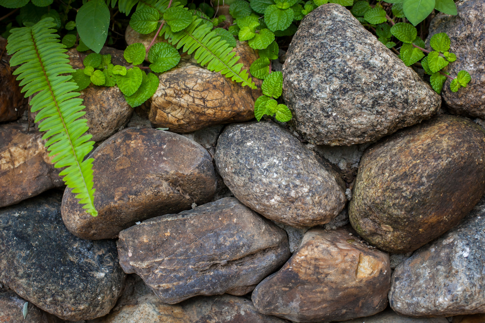 #3 Rock Steady