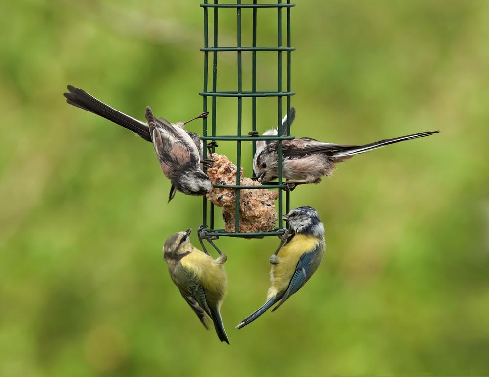 #6 Feed the Birds