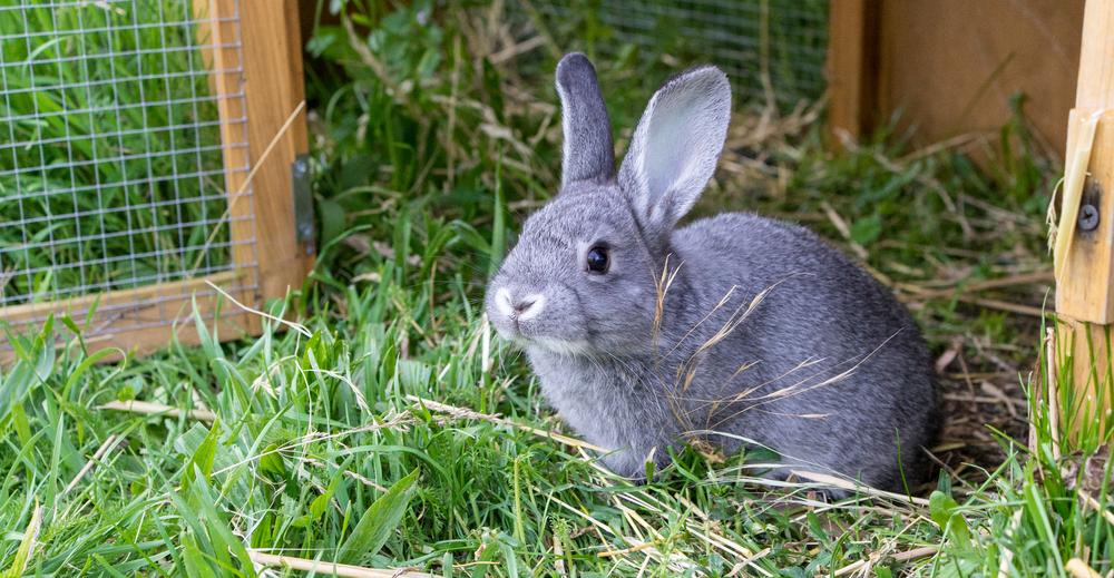 #6 Rabbits