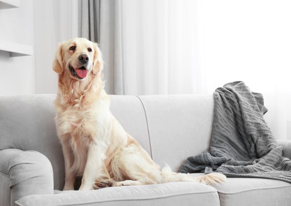 #7 Pets