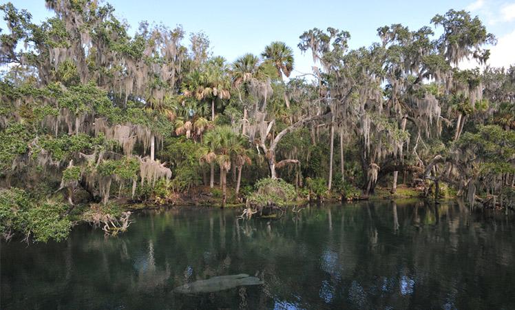 Volusia County Florida