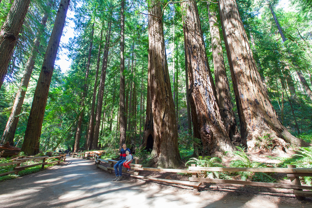 Redwood National Park, Northern California