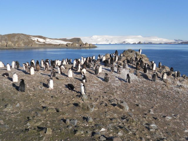 Antarctica, Hang out with Penguins on Barrientos Island