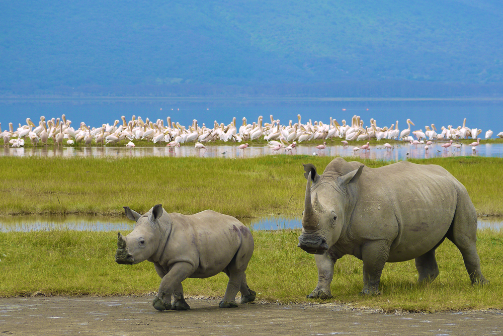 Spend your honeymoon with the big five
