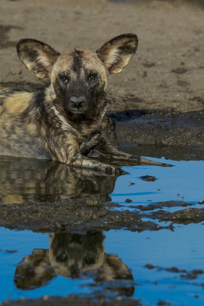 Try a photography tour with Capture Africa Tours