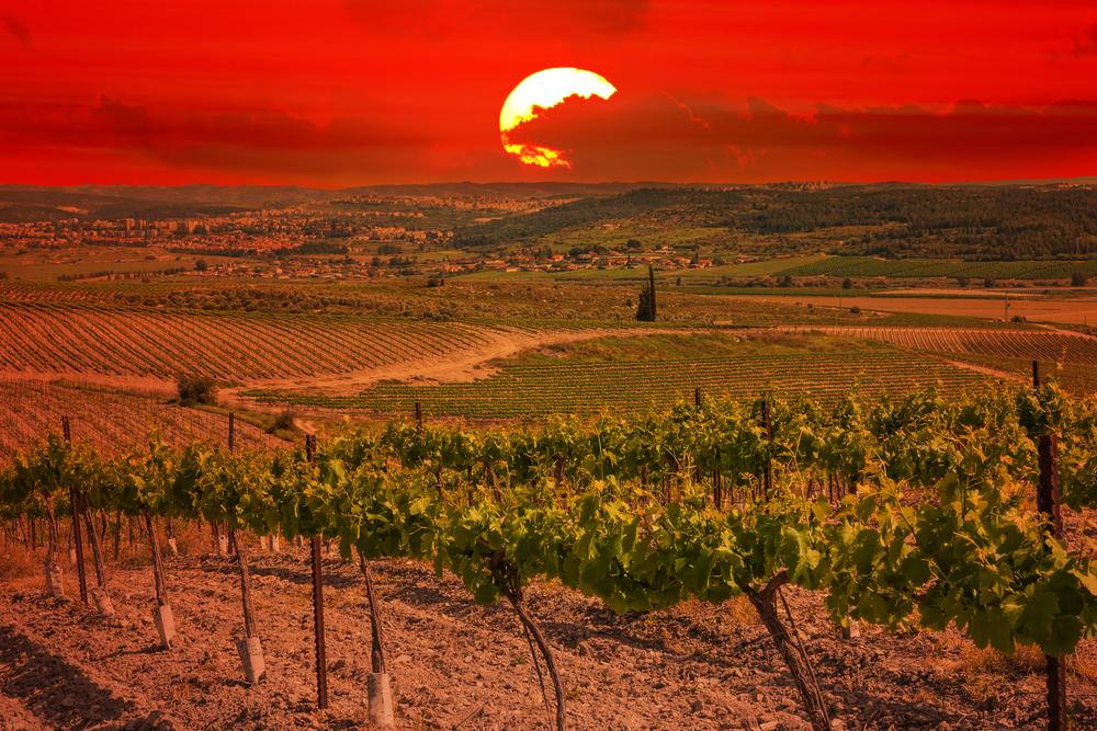 Israel vineyard with sunset