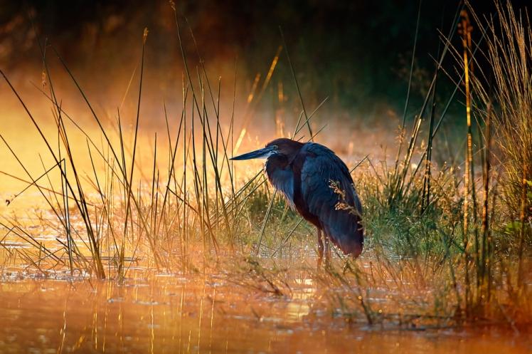 Kruger Park in South Africa