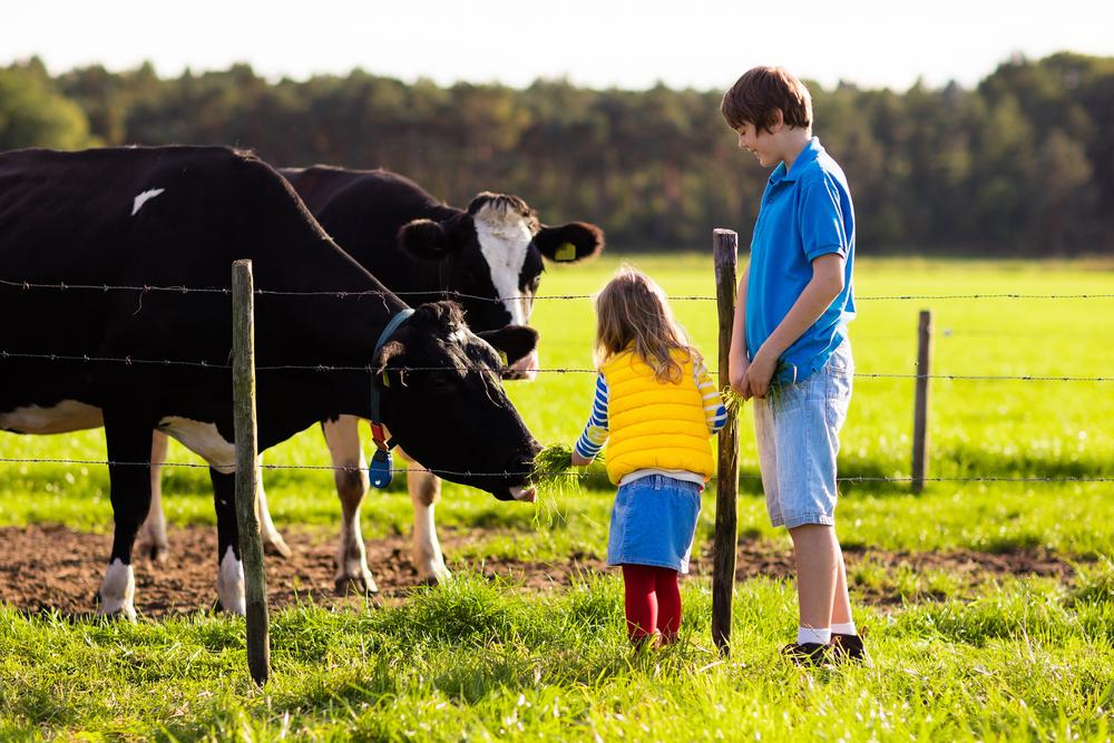 Live Like a Farmer