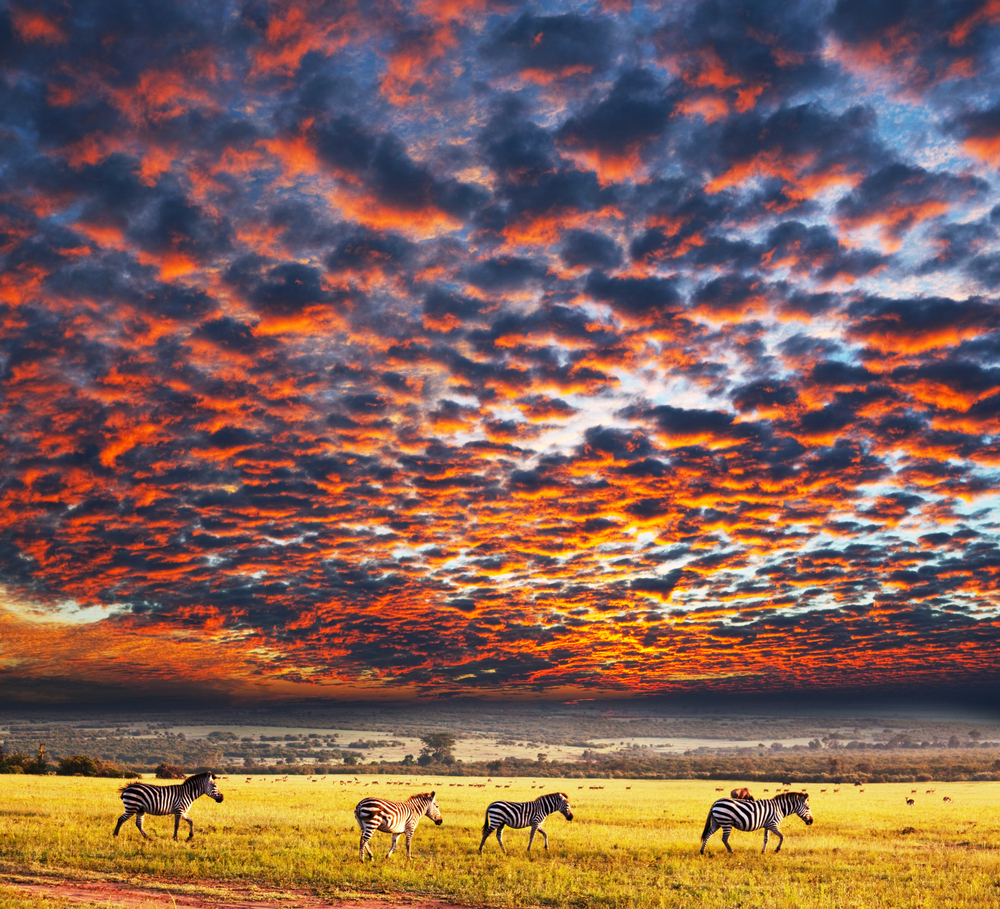 Serengeti | Tanzania