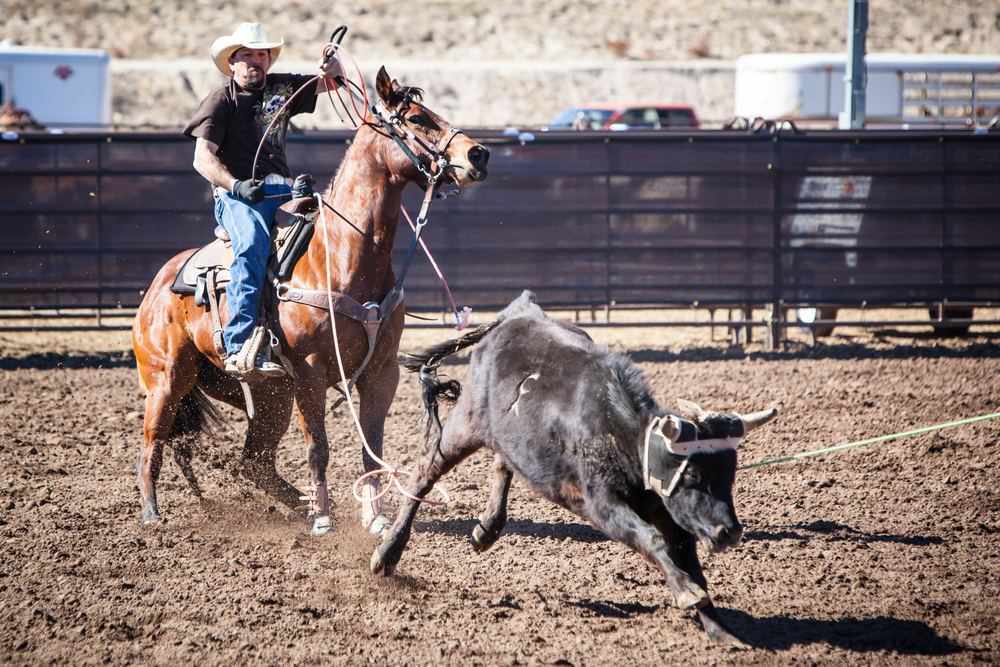 Take Part in a Rodeo, United States