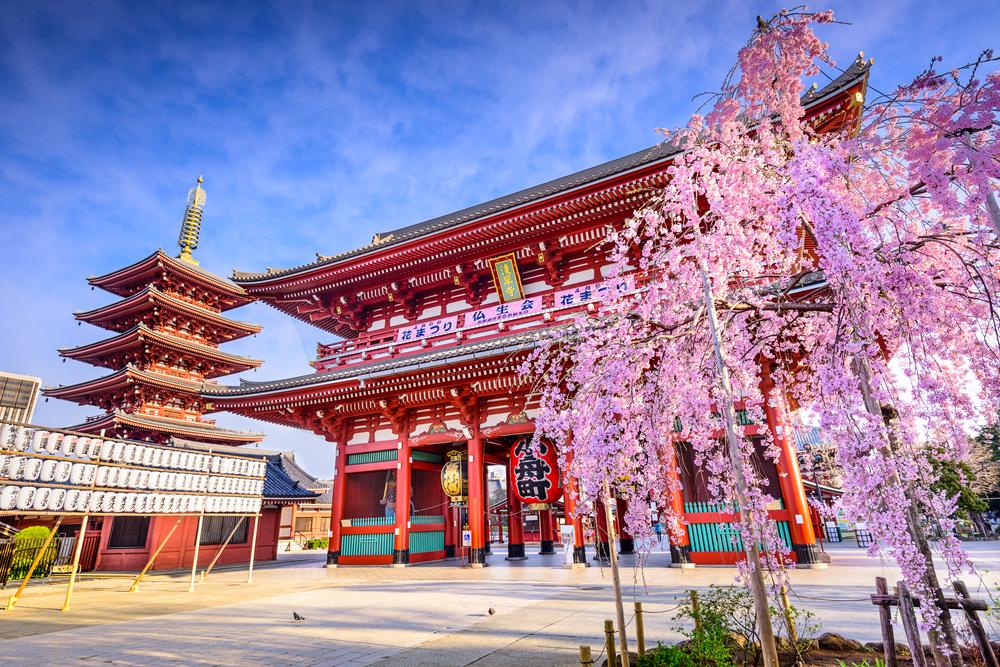 Cherry Blossom - Essence of Spring