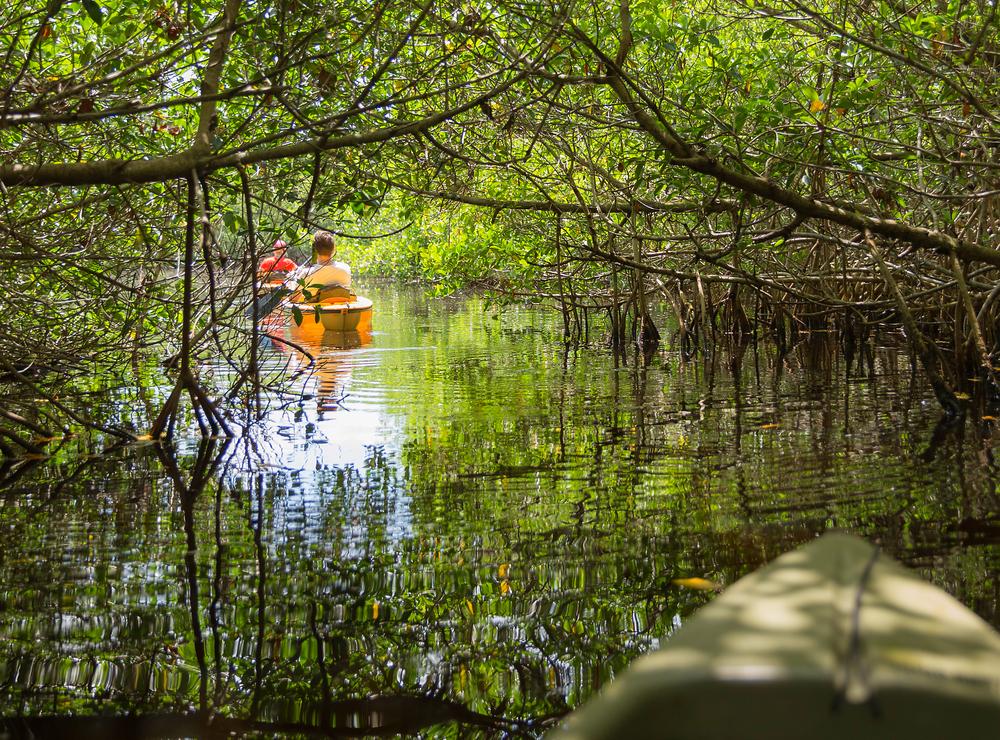 Everglades Mangrove Swamps