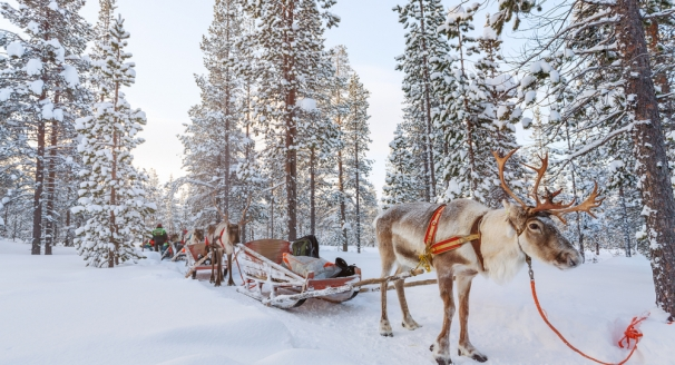 Discover Finland: Snow-Swept Forests and Icy Adventures