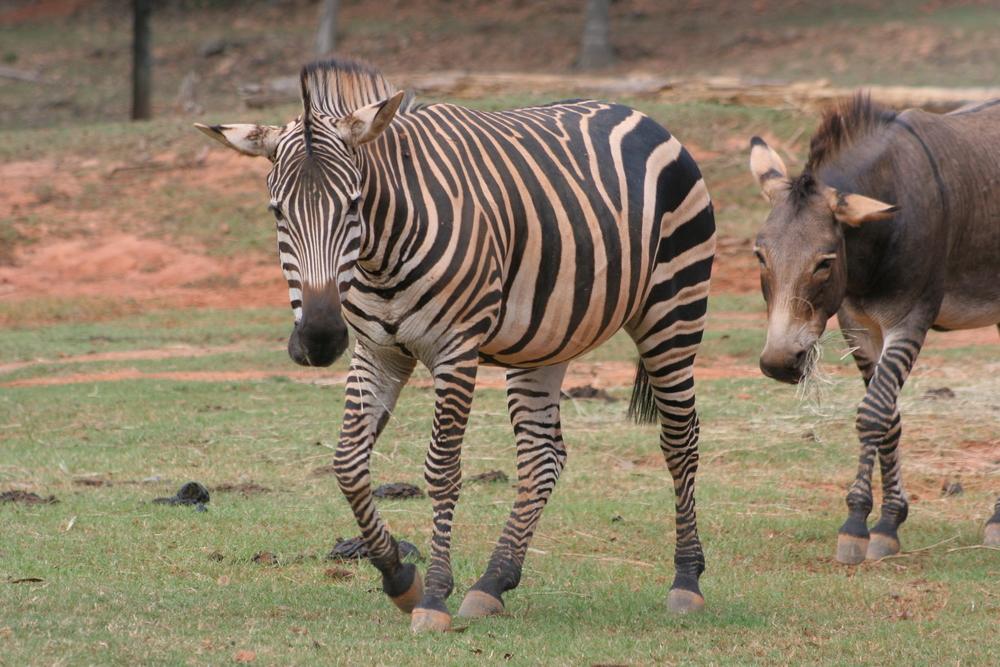 Wild Animal Safari, Pine Mountain, Georgia