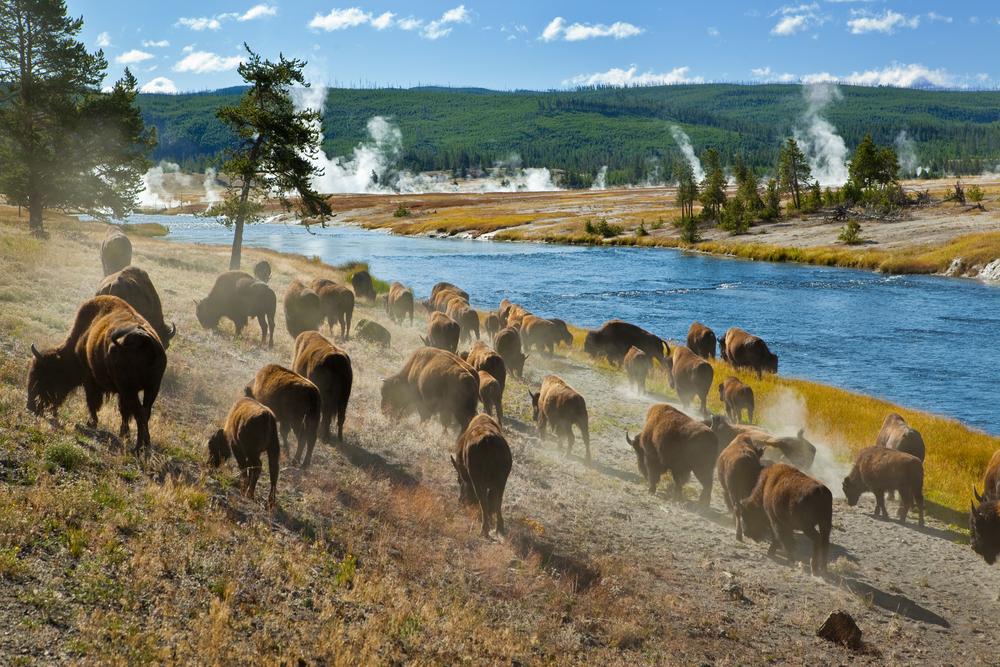 Yellowstone National Park, Wyoming, Montana, Idaho