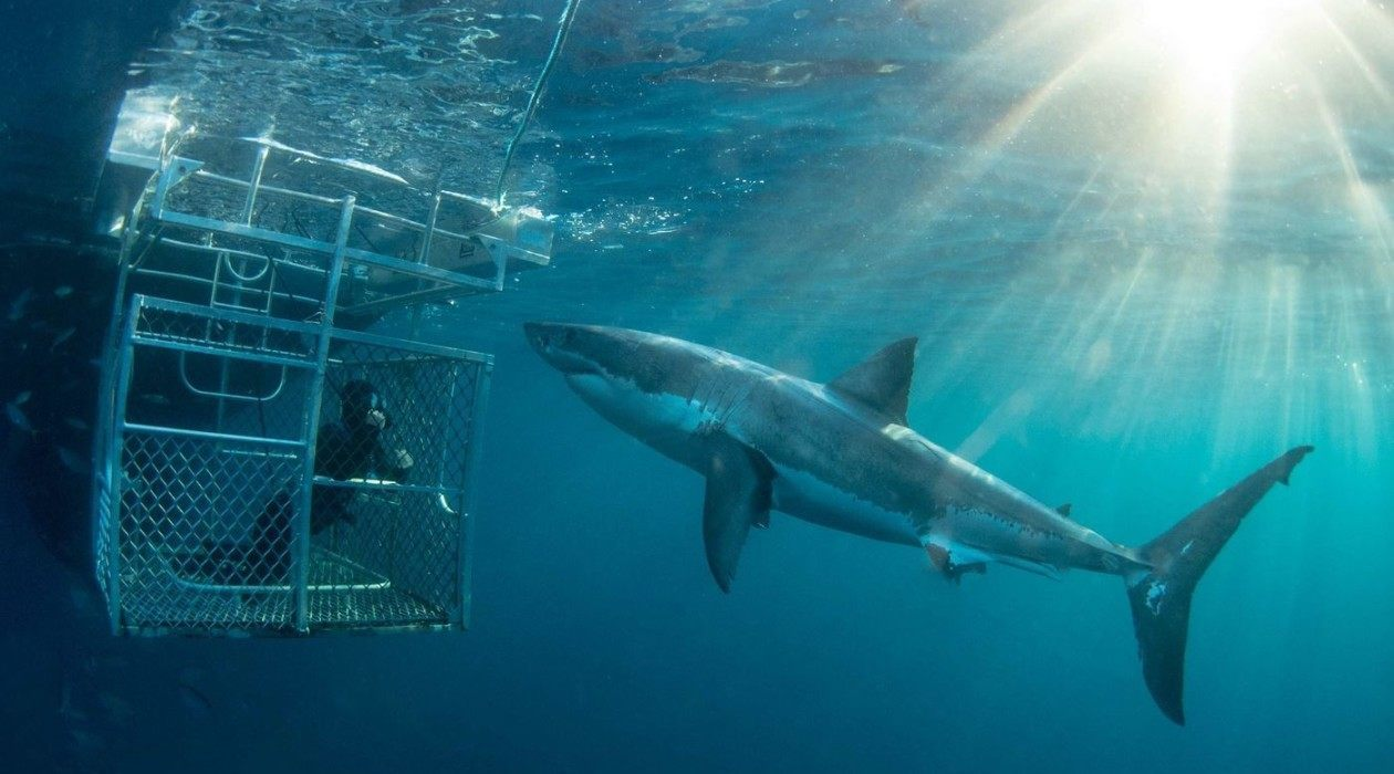 Dive with Great Sharks at Port Lincoln