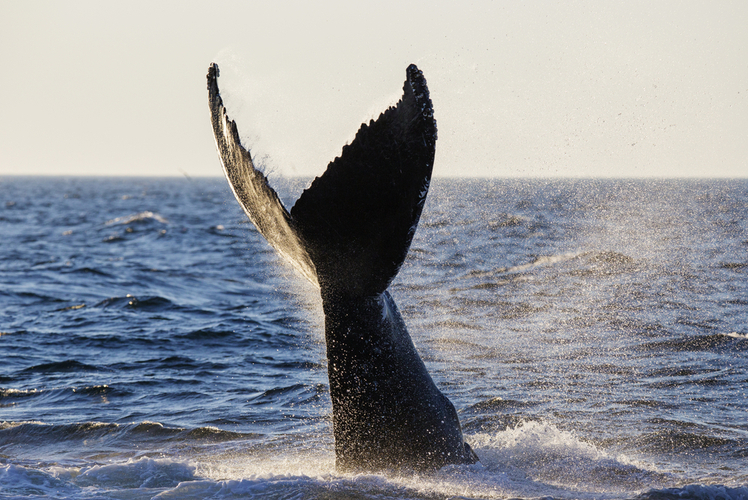 Whale Watching – Cape Cod, Massachusetts