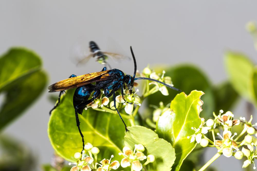#6 Wasps