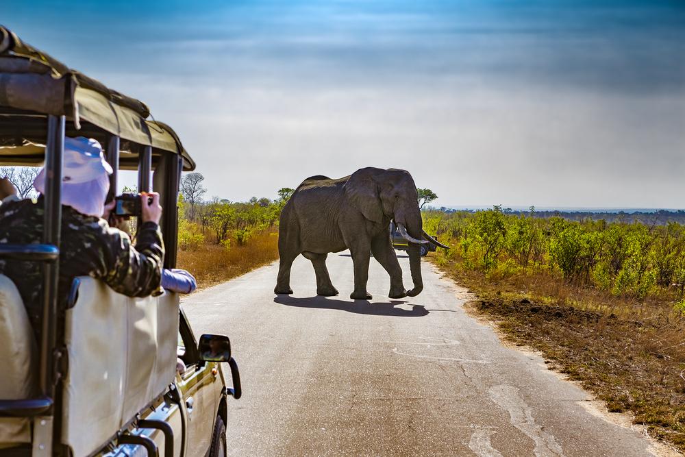#1 Kruger National Park, South Africa