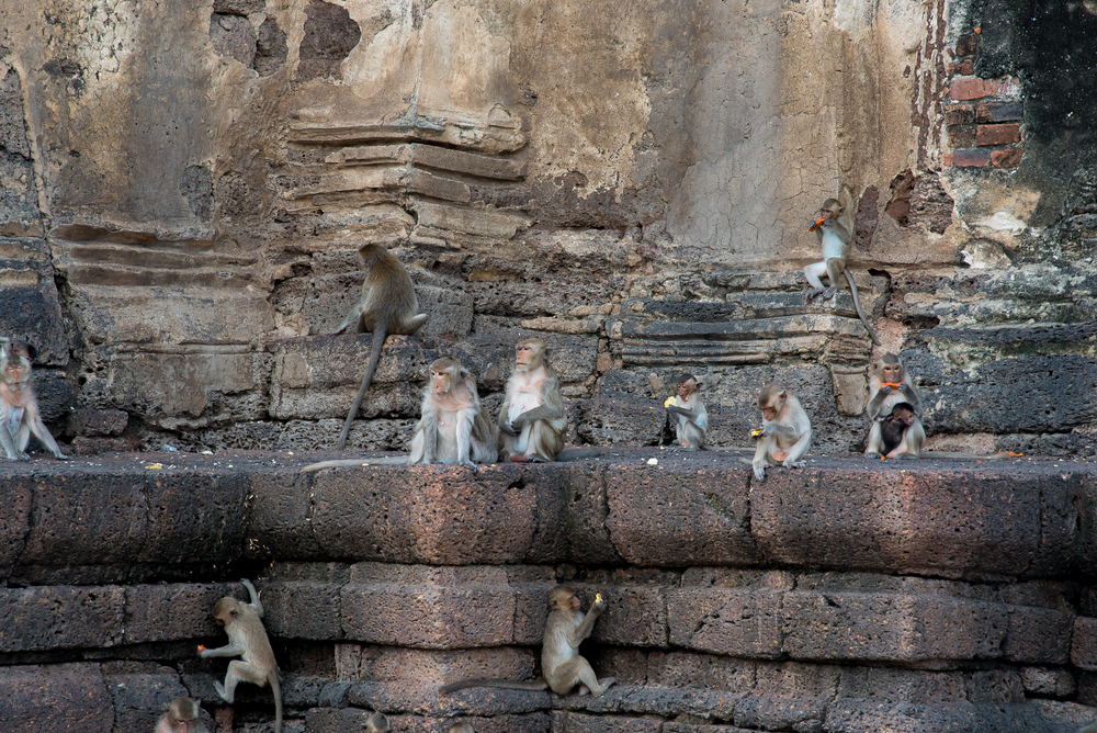 #10 Lopburi Monkey Temples