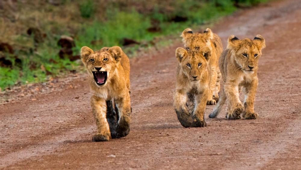 #2 Masai Mara National Reserve, Kenya