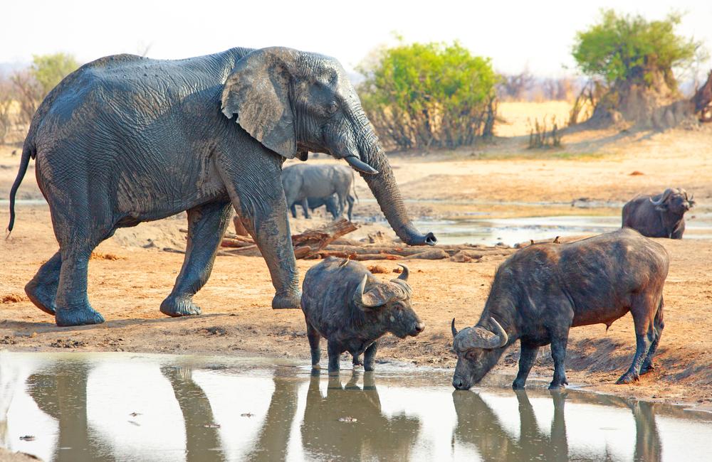 #6 Hwange National Park, Zimbabwe