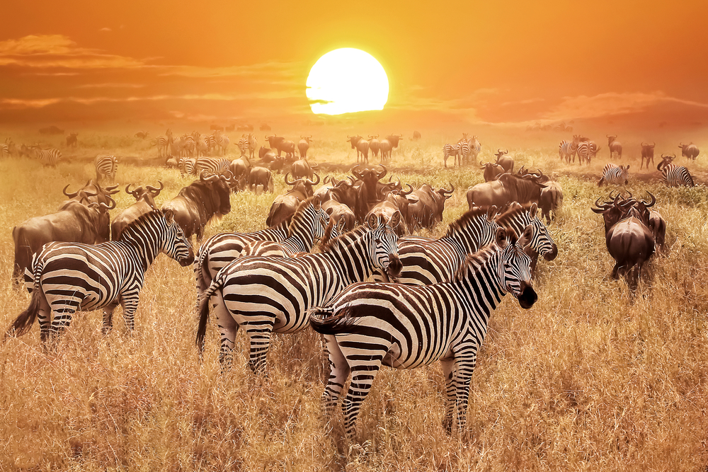 #7 Serengeti National Park