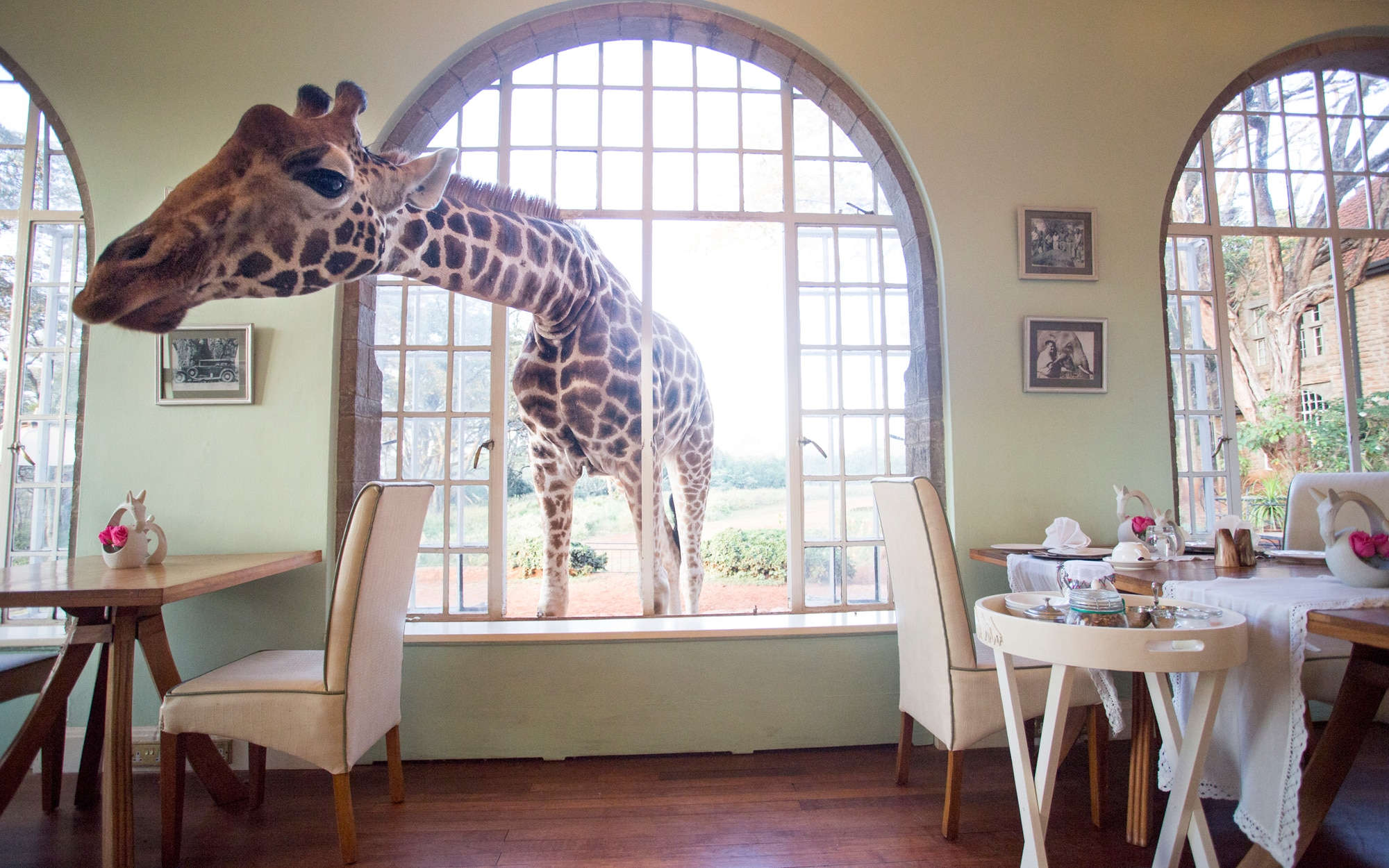 #8 Giraffe Manor, Kenya